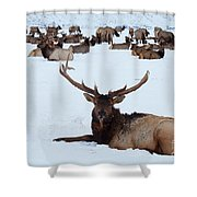 One Plus A Few More Shower Curtain