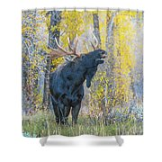 One Proud Bull Moose Shower Curtain