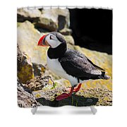 One Puffin In Iceland Shower Curtain