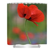 One Red Poppy Shower Curtain