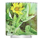 One Rooting In The Sun Shower Curtain