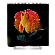 One Rose Shower Curtain