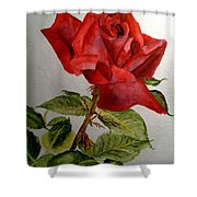 One Single Red Rose Shower Curtain