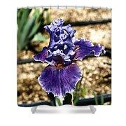 One Sole Iris In Bloom Shower Curtain