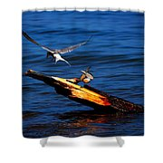 One Tern Flight Shower Curtain by Amanda Struz