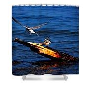 One Tern Flight Shower Curtain