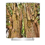 One Tree Six Trunks Shower Curtain