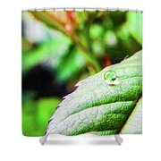 One Waterdrop Shower Curtain