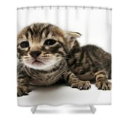 One Week Old Kittens Shower Curtain