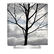 One Winter Tree With Clouds Shower Curtain