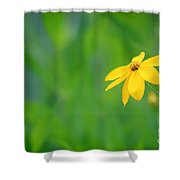 One Yellow Coreopsis Flower Shower Curtain