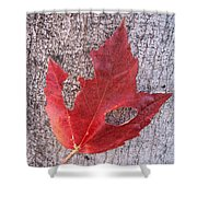 Only One Leaf To Live Shower Curtain