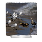 Ducklings In Trouble - Oops Not Into Diversity Shower Curtain