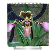Open Arms Orchid Shower Curtain