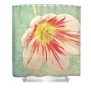 Open Bi-coloured Tulip Shower Curtain