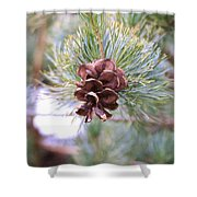 Open Pine Cone Shower Curtain