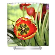 Open Tulip Shower Curtain