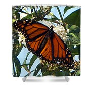 Opened Wings  Shower Curtain
