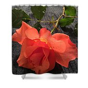 Opened Rose  Shower Curtain