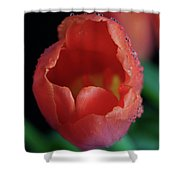 Opened Tulip Shower Curtain by Tracy Hall