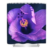 Opening Purple Hibiscus  Shower Curtain