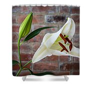 Opening White Lily Shower Curtain