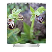 Ophrys Kotschyi Wild Orchid Plant. Shower Curtain