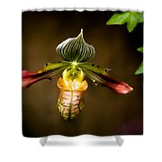 Oprah's Orchid Shower Curtain