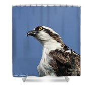 Opsrey Portrait Shower Curtain
