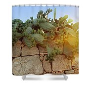 Opuntia Cactus In The Sunset Shower Curtain