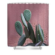 Opuntia Microdasys Shower Curtain