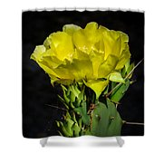 Opuntia Robusta Flower Shower Curtain