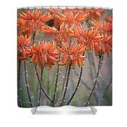 Orange Aloe  Shower Curtain