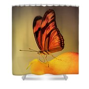 Orange And Black Butterfly Sitting On The Yellow Petal Shower Curtain