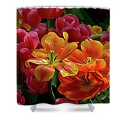 Orange And Red Tulip Lilies In Various Stages Of Bloom Shower Curtain