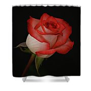 Orange And White Rose Shower Curtain