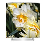 Orange And Yellow Double Daffodil Shower Curtain
