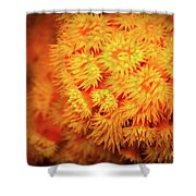 Orange Anemones Shower Curtain