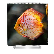 Orange Aquarium Fish In Zoo Shower Curtain