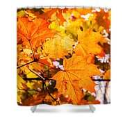 Fall Of Orange Leaves Shower Curtain