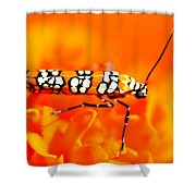 Orange Beetle On Orange Flower Shower Curtain