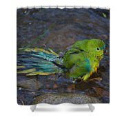 Orange Belly Bath Time Shower Curtain