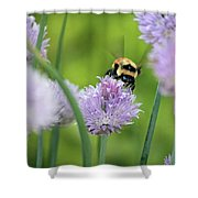 Orange-belted Bumblebee On Chive Blossoms Shower Curtain