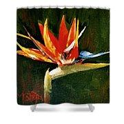 Orange Bird Of Paradise Shower Curtain
