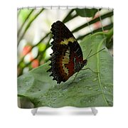 Orange Black Butterfly Shower Curtain