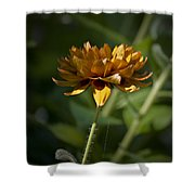 Orange Blanket Flower Shower Curtain