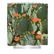 Orange Blossom Cactus  Shower Curtain