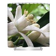 Orange Blossoms #1 Shower Curtain
