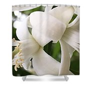 Orange Blossoms #4 Shower Curtain