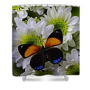 Orange Blue Butterfly On Poms Shower Curtain